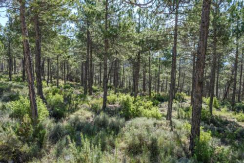Foto 1. Servicios forestales